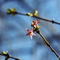 野草コースの他の花も~武蔵丘陵森林公園~
