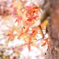 【今日の湯沢】里に初雪が降りました。秋色の忘れ物とともに、白い世界をお届けします。