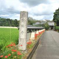 太田常楽寺ヒガンバナ  R- 3- 9-16