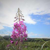 真夏の花空