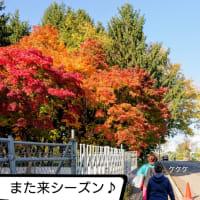 琉くんと北海道ロードレース2019(ハーフ)