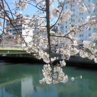 大岡川プロムナード (横浜)