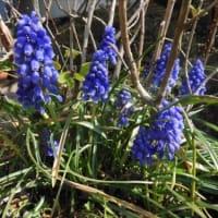 庭 の 花 (No 2229)