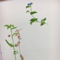 新100チャレ①「植物画の練習」