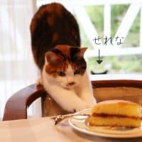 ヴィクトリアサンドイッチにゃの。