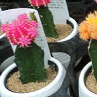街角に咲く花✿街角ぶらり旅08-07