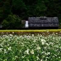蕎麦の花咲く頃~