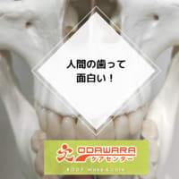 人間の歯って面白い!