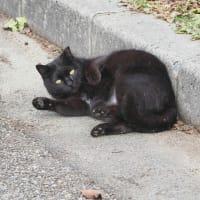 カワセミと黒猫