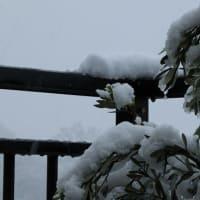 昨日は20℃・今日は雪