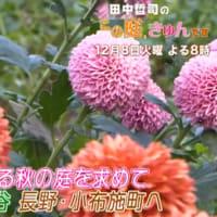 田中哲司のこの庭、きゅんです
