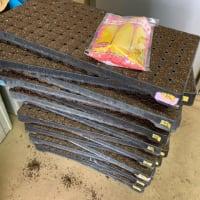トウモロコシ播種4回目&枝豆クルーザー処理