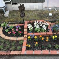 雨の合間に花壇チェック