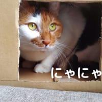【138】れいにゃん堂のれいちゃん・隠れ家にゃ&商品紹介😸