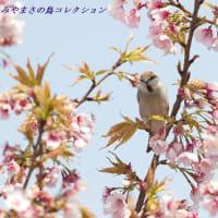 今日の鳥コレクション・・・緊急告知