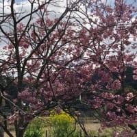 南房総から春の便りが届きました🌸🌸