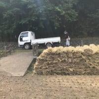 恒例の稲わらとハウス修繕