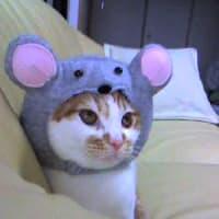 そろそろ猫の干支のコスプレの準備です♪