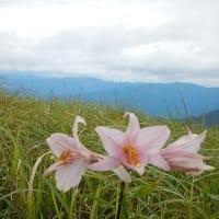 生石高原(関百)☆山野草を探しに(7月15日)