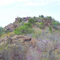アケボノ咲く西赤石山9