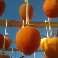 今日の枯露柿(11月25日)