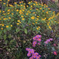 💖干支の【子】を折る+庭の花