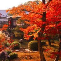 秋の京都 奥嵯峨を歩いてみませんか? 大覚寺