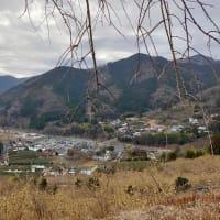 サイクリング:松田町 寄(やどろぎ)の蝋梅を観てきました