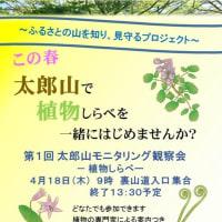 上田市太郎山で植物しらべ