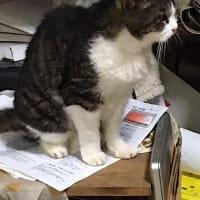 イチゴちゃんを探している猫たち!