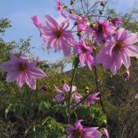 💖五岳山登山でみた花