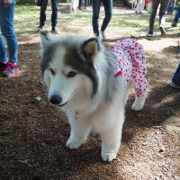 Dog Lovers KIYOSATO☆2019に参加させて頂きました。