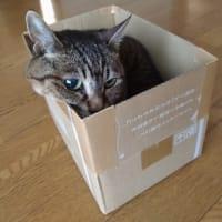 やっぱり箱が好き2020♪♪②