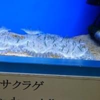マリホ水族館に行って来ました。