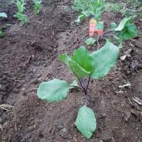 ◆小さな小さな家庭菜園