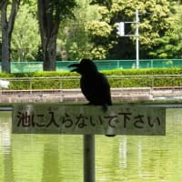 """日本人は""""♪やめられない!♪とまらない!カルビ~の""""かっぱえびせん体質ですか??"""
