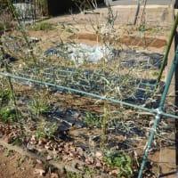 3月の菜園