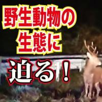 ラディアルレイズ ネイチャーラディ 動画アップロードじゃ!