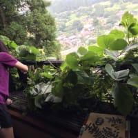 植物の勢い