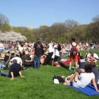 セントラルパークは、すでに真夏の賑わい
