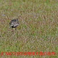 今日の鳥見:宇宿漁港と大瀬海岸
