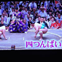 12/15 シムラ動 相撲観戦をする犬 ちょうどお雛様が行儀していた