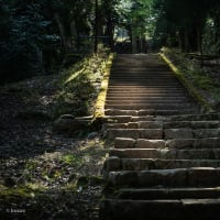 【Apr_07】温泉寺本堂へのアプローチ