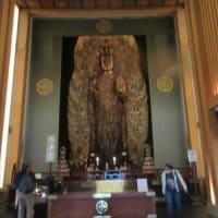 ミーコの鎌倉