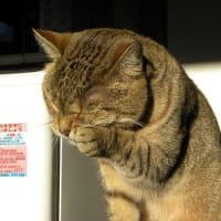 気になるところが多くなって来たお年頃の猫!