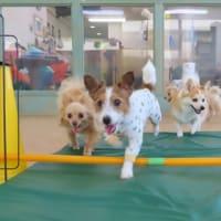 """5月9日の【ALOHA塾】は、《アロハ💛座談会》""""動物病院の上手なかかり方&付き合い方""""  犬のしつけ教室@アロハドギー"""