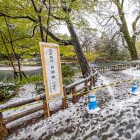 季節外れの雪と桜と・・・