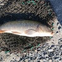 25匹以上~~釣りました。
