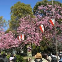 花見散歩~上野公園・外濠公園