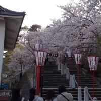 福井県ドライブ~「油揚げ」と「丸岡城の桜」~